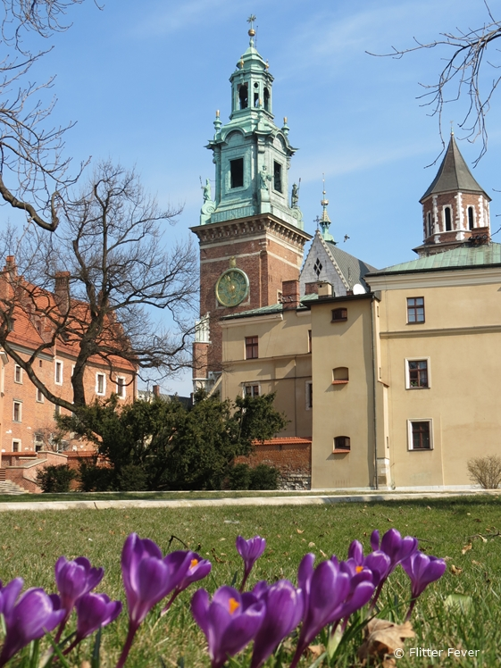 Spring flowers at Wawel Royal Castle and Cathedral