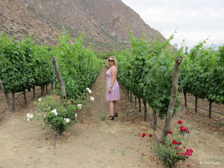 Cafayate wineries vineyard