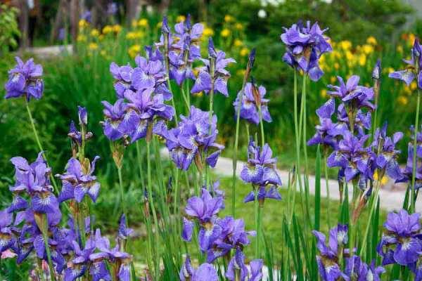 Многолетние цветы и растения: фото и название, посадка и уход.