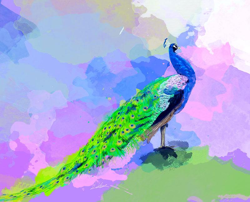 Peacock Dream small
