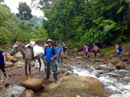 River Crossing with Pack Horses on Mountain Clinic