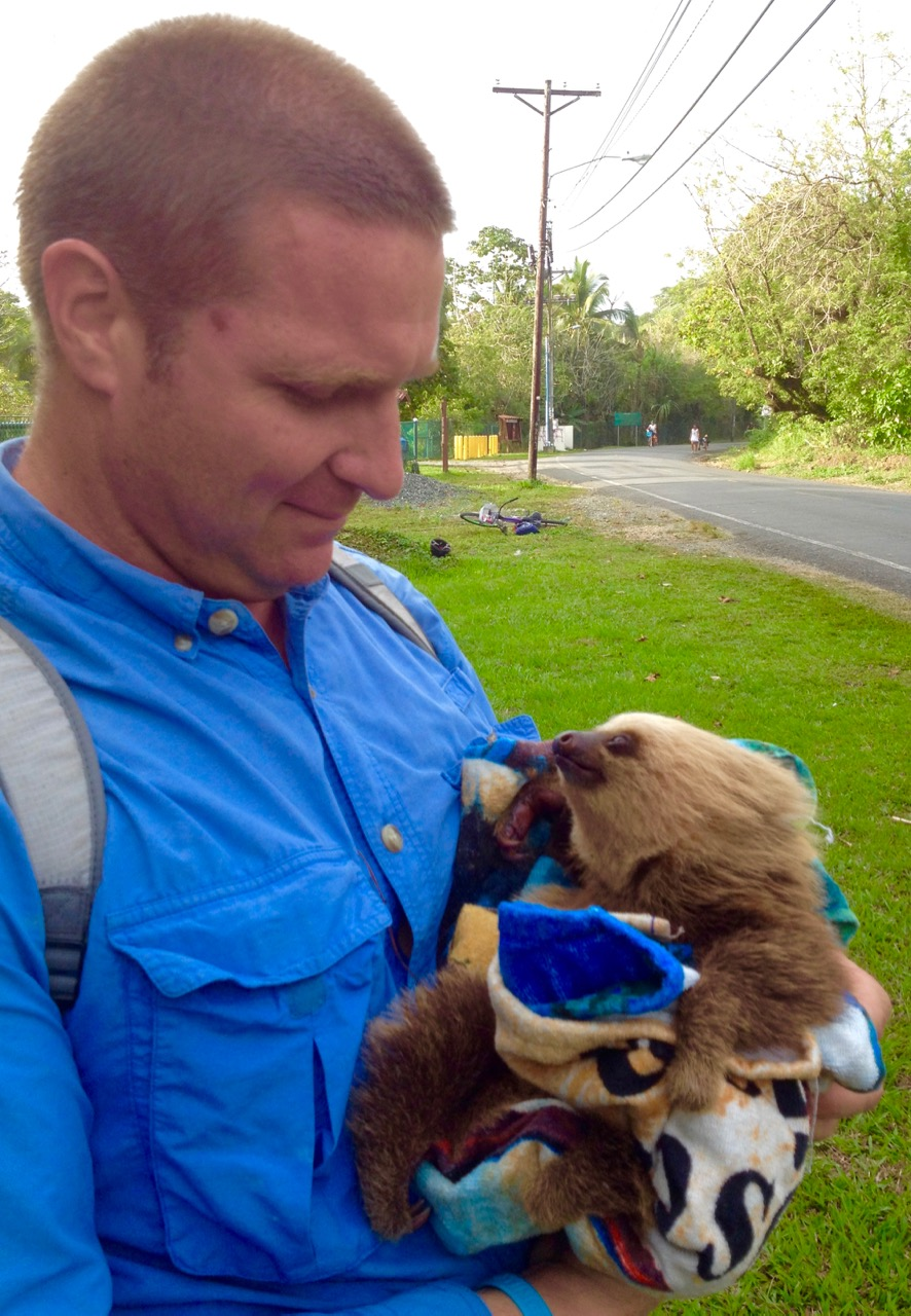 Sloth Rescued from Barb Wire Entanglement