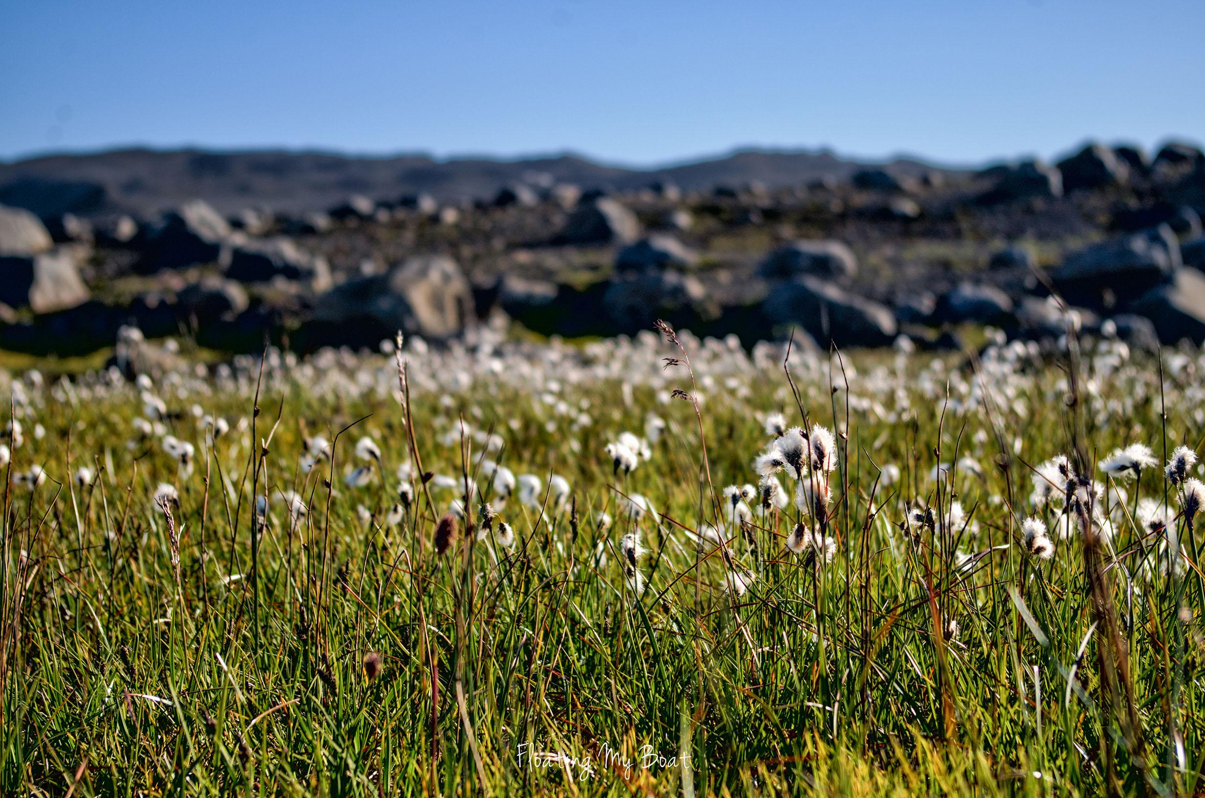 trekking-iceland-vatnajokull-national-park-58