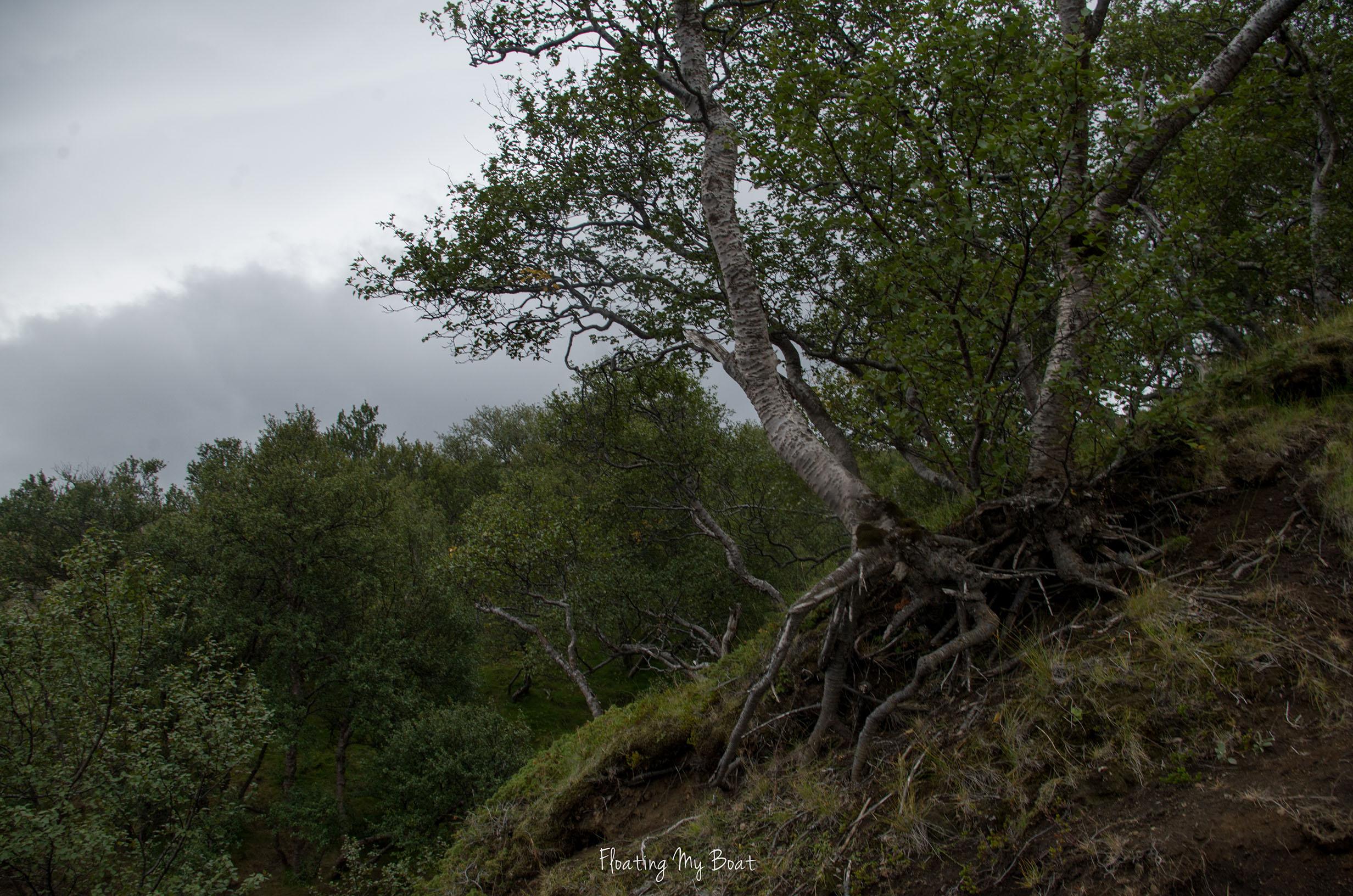 iceland-laugavegur-Þórsmörk-Húsadalur
