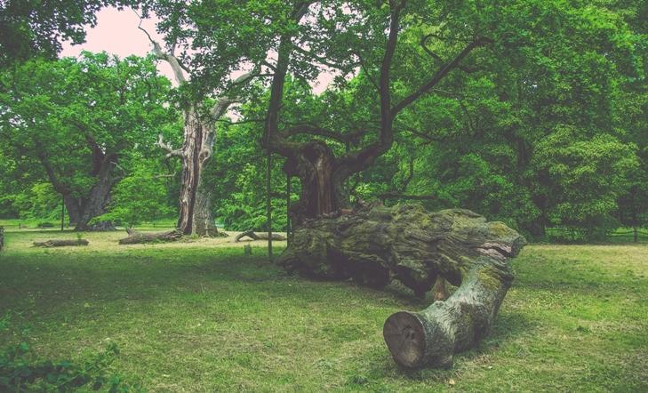 Rogalin Landscape Park, pałac w rogalinie, lech czech i rus