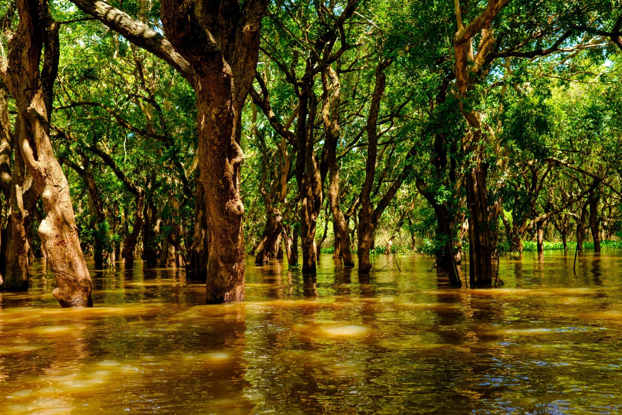 siem reap flooded forests kampong phluk