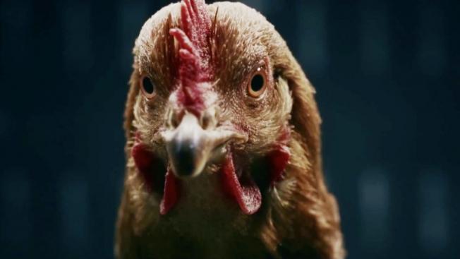 benz-chicken-ad-1