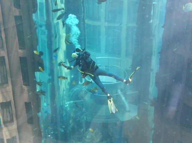 Aquarium-In-Radisson-Sas-Hotel-2
