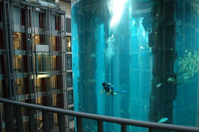 Aquarium-In-Radisson-Sas-Hotel-7