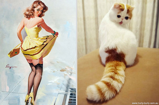 cats-that-look-like-pin-up-girls-13