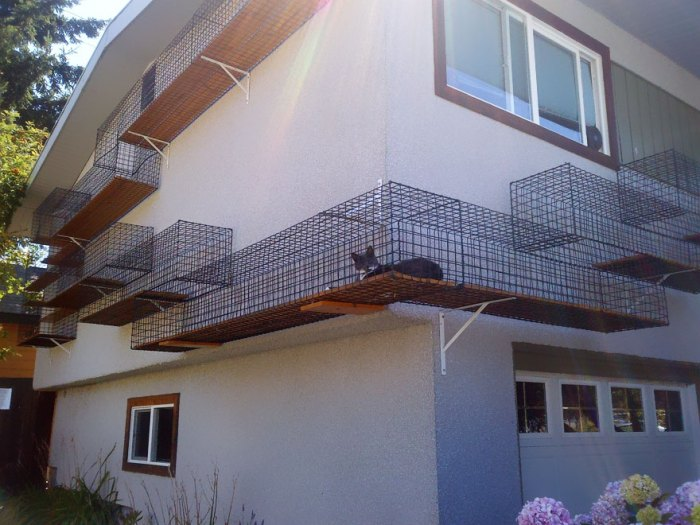 室外貓龍可以盡情奔跑