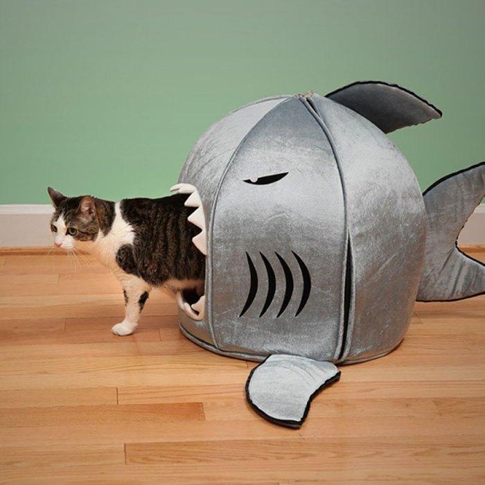 鯊魚咬吐司也咬貓咪