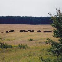Im Angesicht des Bären (1)