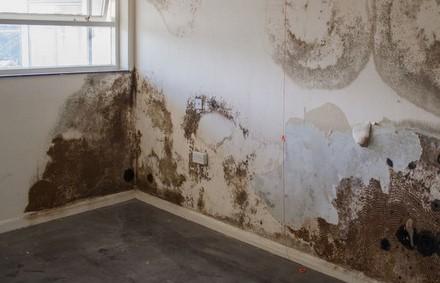 mold remediation services buffalo ny