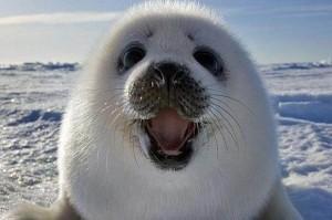 Not seal -Sealer - Seal-E-R!