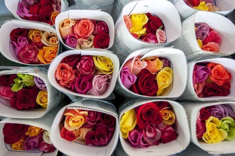 Resultado de imagen para flores ecuatorianas