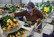 Mercados de exportación de flores ecuatorianas