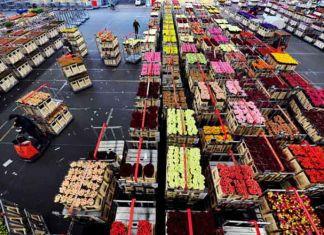 Una mirada a China como importador de flores ecuatorianasUna mirada a China como importador de flores ecuatorianas