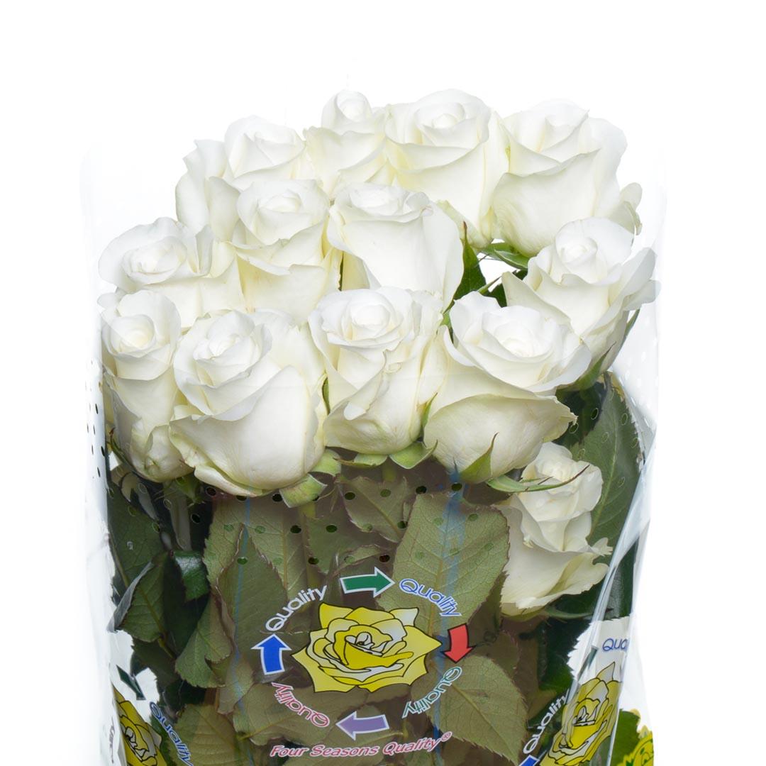Resultado de imagen de bellas rosas en postales