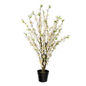 Cerisier Blanc Cindia H100