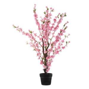 Cerisier Rose Camella H100