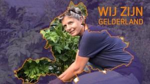 omroepgelderland