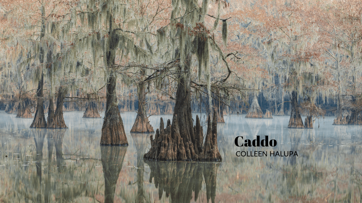 Caddo by Colleen Halupa