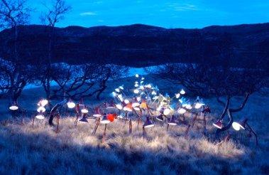 herd-of-lamps