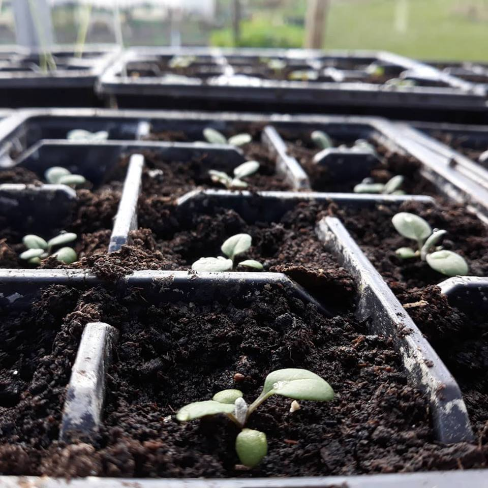 Organising seeds