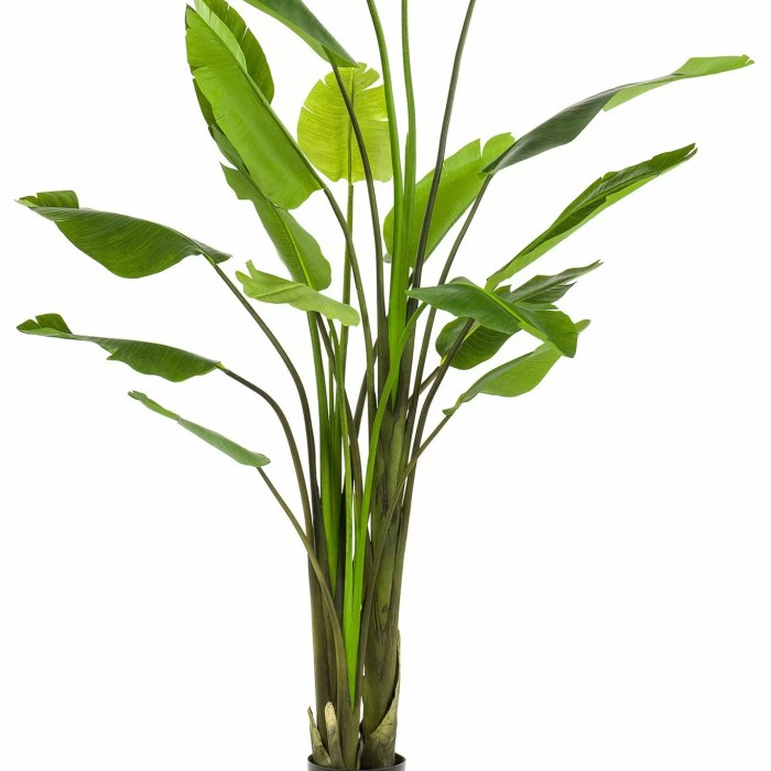 Strelitzia Kunstplant