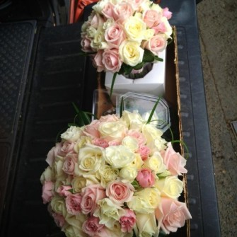 light pink & white roses