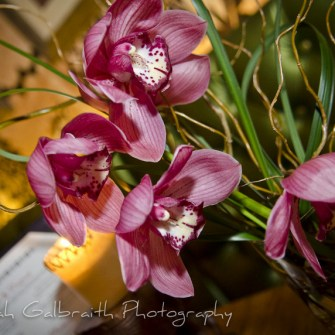 Pink cymbidium orchids