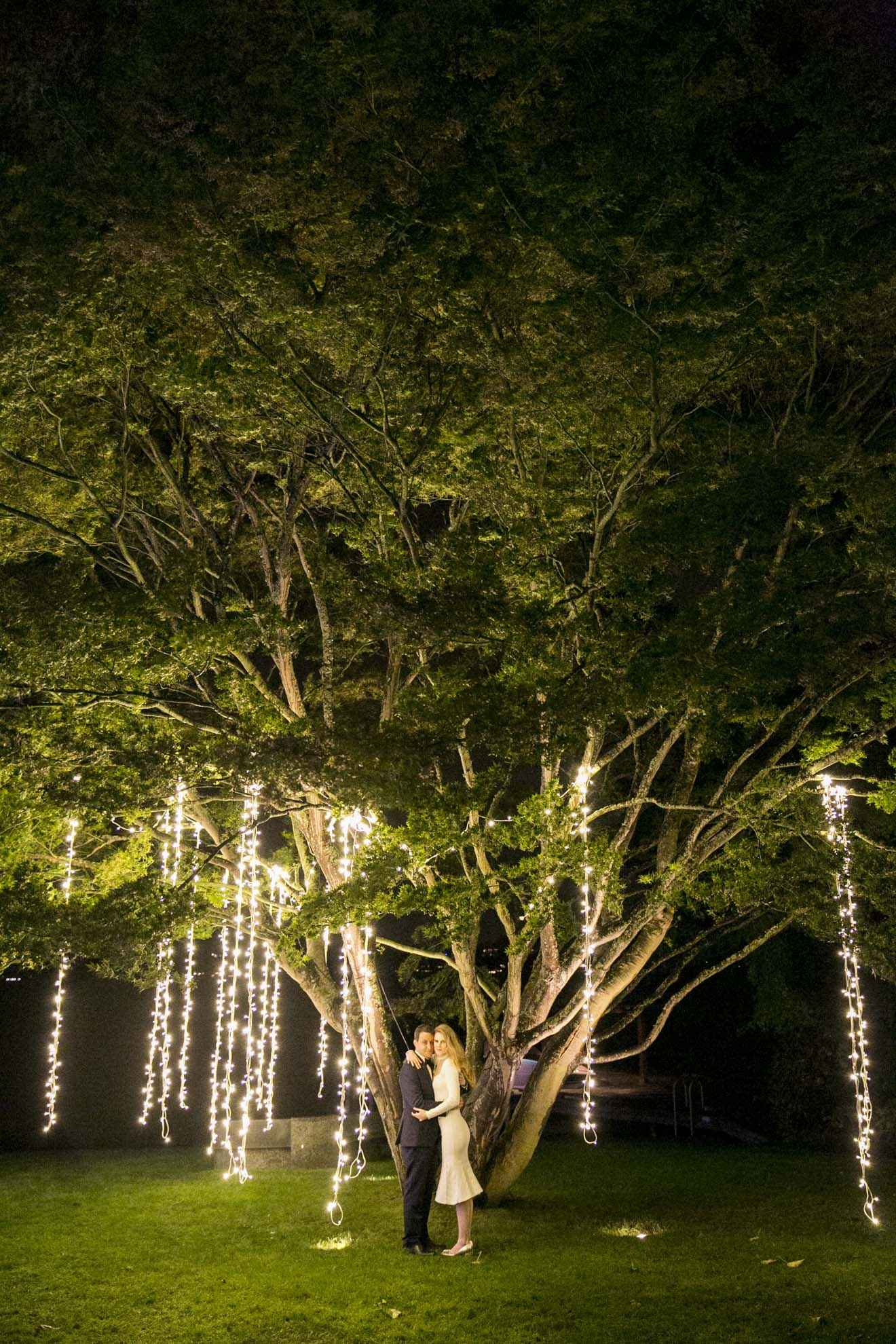 Wedding reception at night with light strands in willow tree