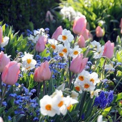 Kora tavaszi virágválogatás