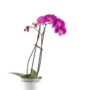bouquet fleurs Orchidée violette ou rose
