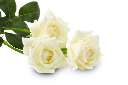 Roses blanches Bouquet de roses blanches maroc