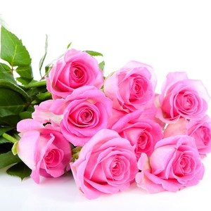 Roses rose maroc