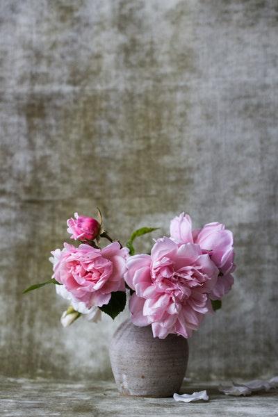 Découvrez ce que symbolisent vraiment les fleurs les plus populaires