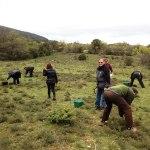 Initiation à la cueillette de plantes aromatiques