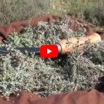 Vidéos Flore en Thym