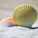 Zeit für's-Ich - cropped muscheln pixabay