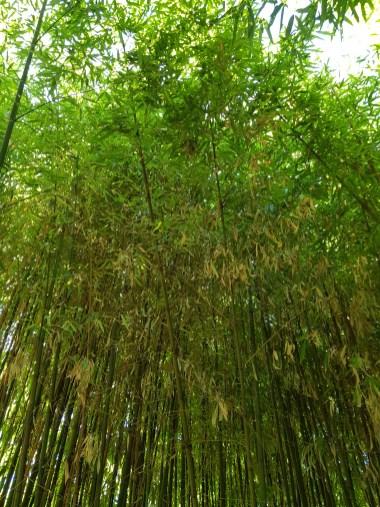 Bambus, Copyright Florence Zumbihl