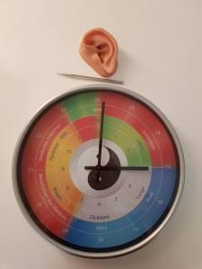 Organuhr – Metallstäbchen – Demo-Ohr für die Akupunktmassage