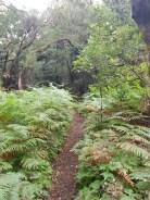 Nationalpark Garajonay Seminarreise La Gomera mit Florence Zumbihl