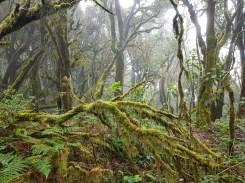 Nationalpark Garajonay Naturwesen Seminarreise La Gomera mit Florence Zumbihl