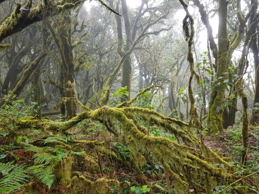Mystischer Regenwald Garajonay (C) Florence Zumbihl