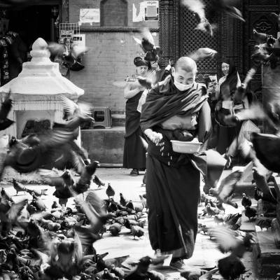 A monk among birds
