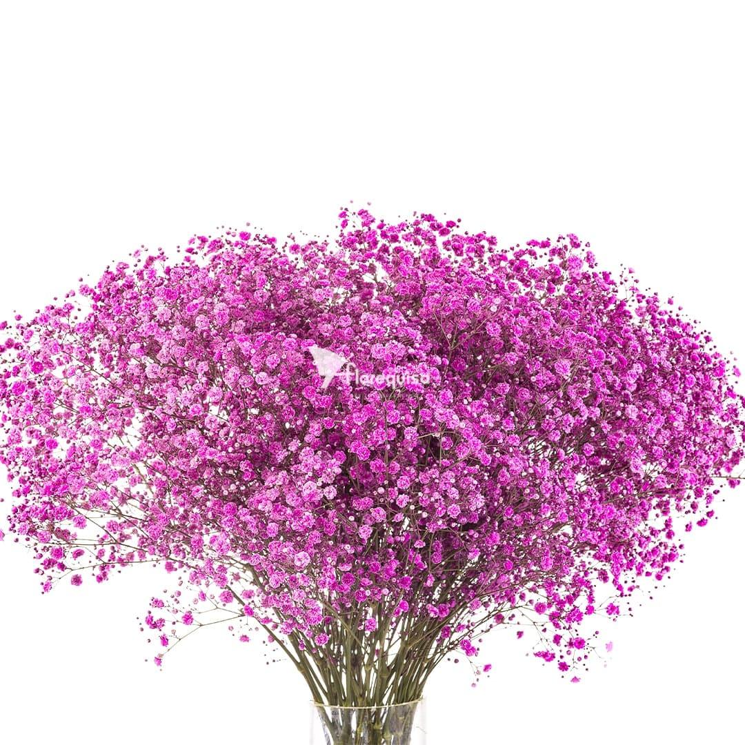 Dark Pink Gypsophila by Florequisa Flower Growers