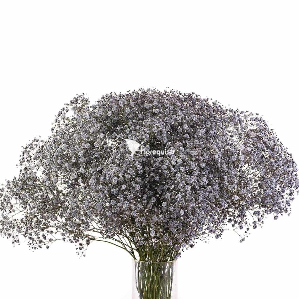 Gray Gypsophila by Florequisa Flower Growers