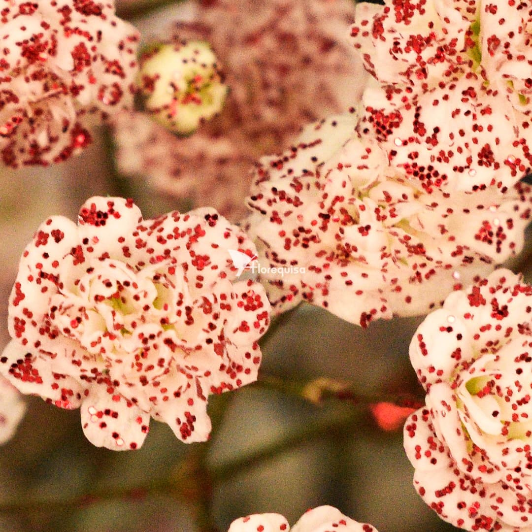 Gypsophila Glittered Red by Florequisa Flower Growers